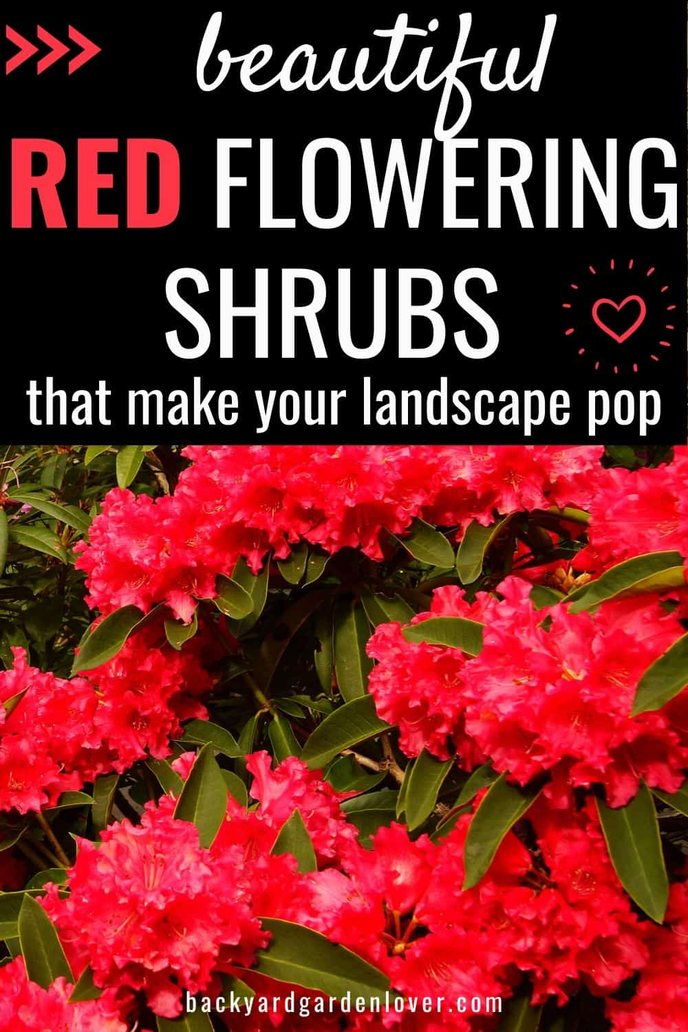 Beautiful red flowering shrubs