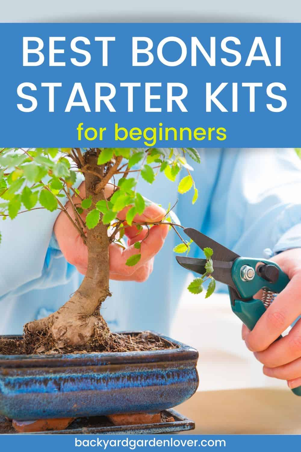 Best bonsai starter kits for beginners