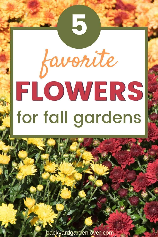 Favorite flowers for fall gardens pinterest image