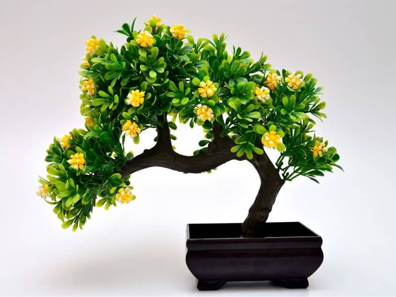 Bonsai tree with yellow flowers