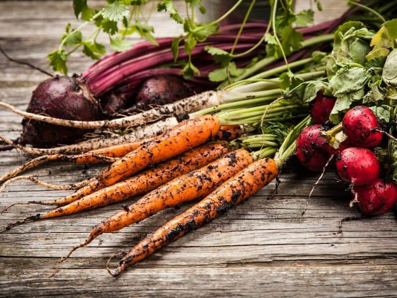 Organic root vegetables: carrots, beets and radishes