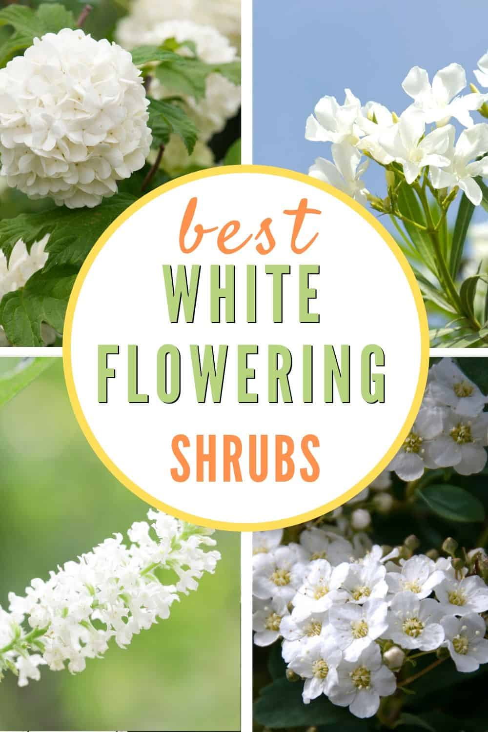 Collection of white flowering shrubs