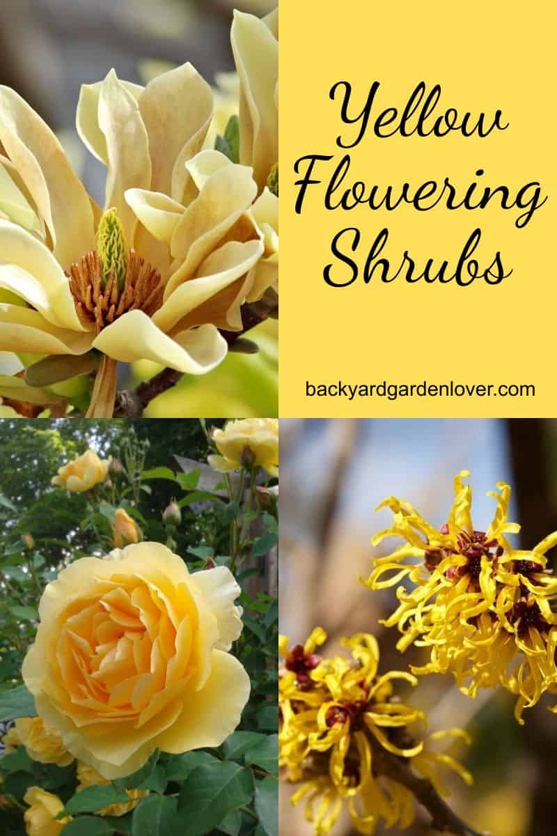 Yellow flowering shrubs collection