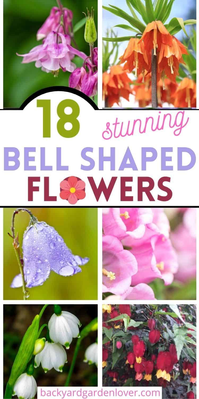 Stunning bell shaped flowers - Pinterest image