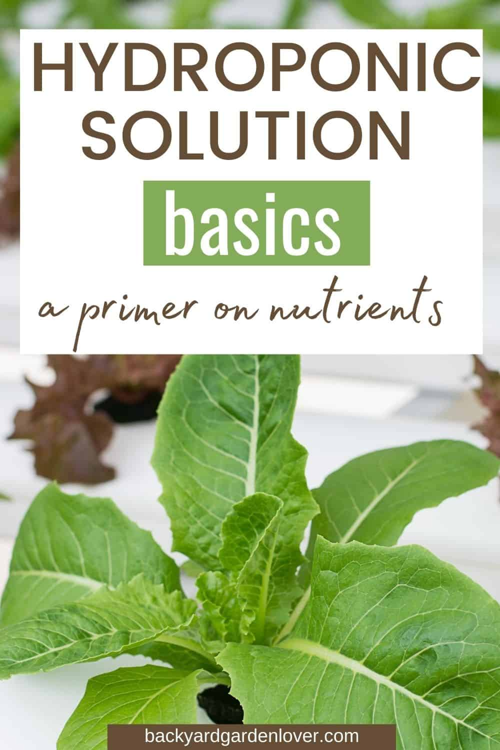 Hydroponic solution basics -  a primer on nutrients-  Pinterest image