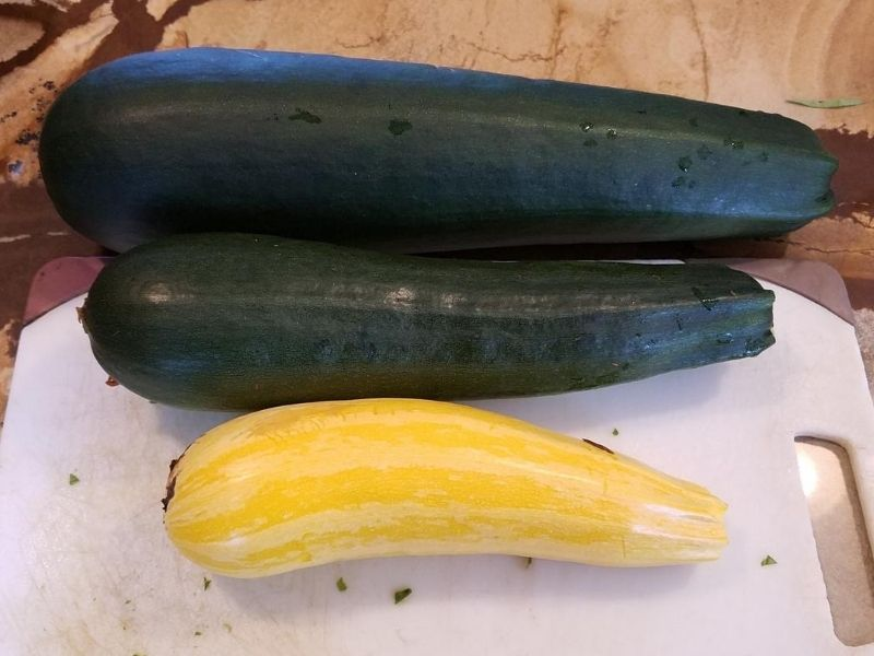 3 freshly picked zucchini