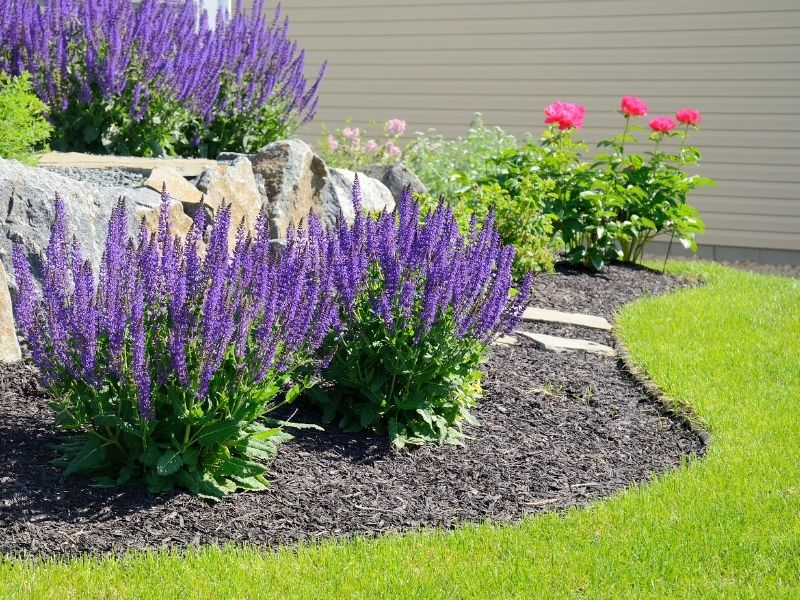 Landscape using bloulders and purple Russian sage flowers