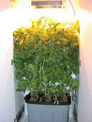Closet hydroponic setup
