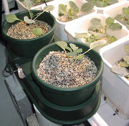 Filling the autopots