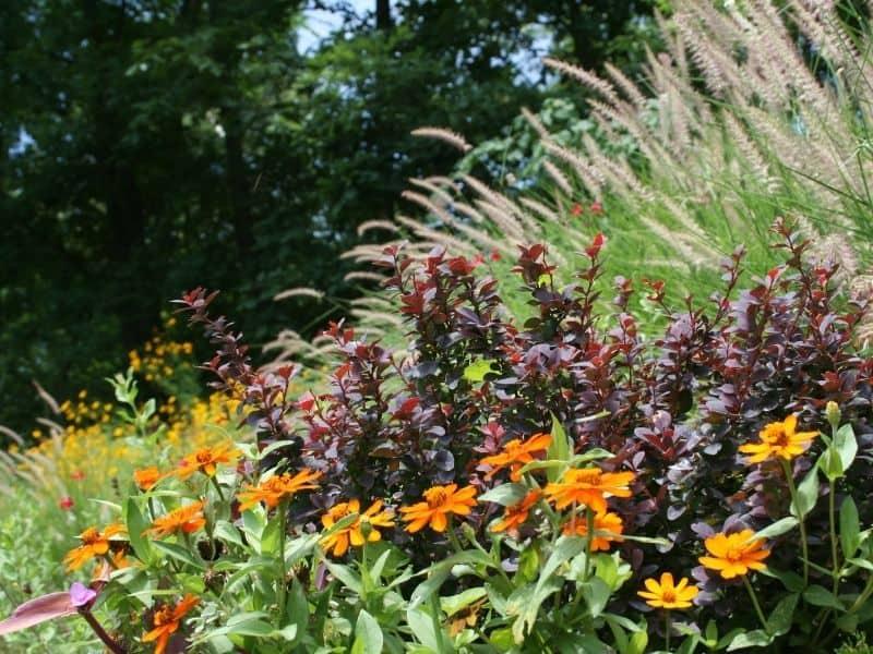 Hillside flower garden