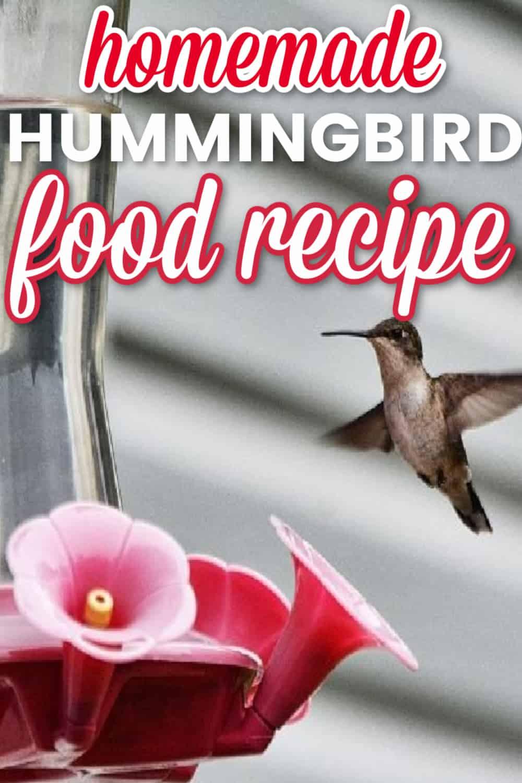 Homemade hummingbird food recipe - Pinterest image