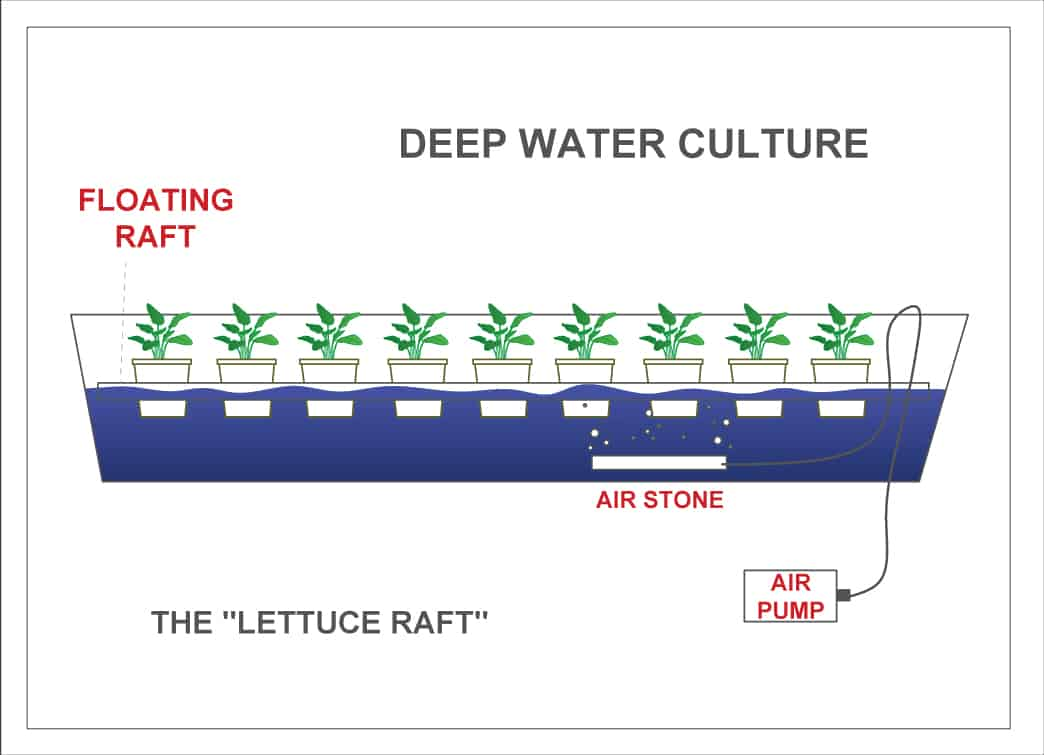 Diagram of a lettuce raft hydroponic system