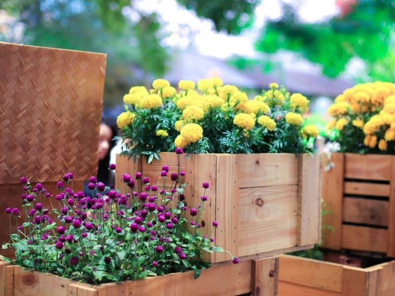 Milk crates filled with flowers