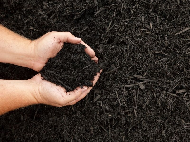 Hands holding mulch