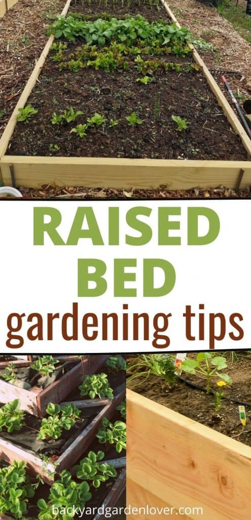 Raised bed gardening tips - Pinterest image