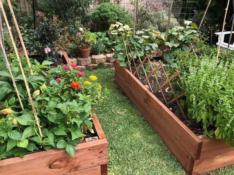 Flowers and veggies growing in raised beds made from raised garden bed kits