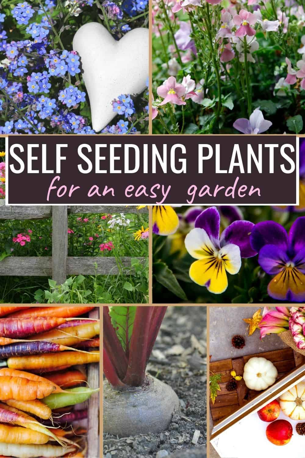 Self seeding plants collage