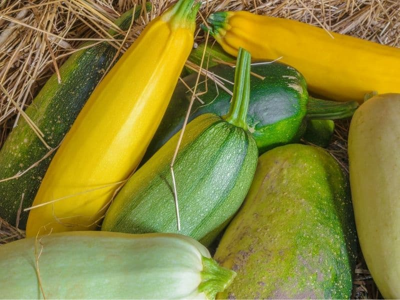 A bunch of squash and zucchini