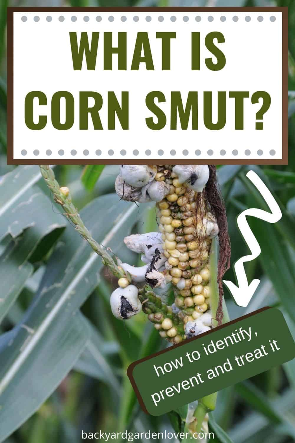 What is corn smut - Pinterest image
