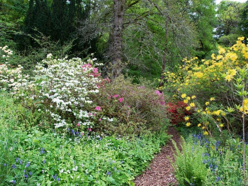Path going through a beautiful woodland garden