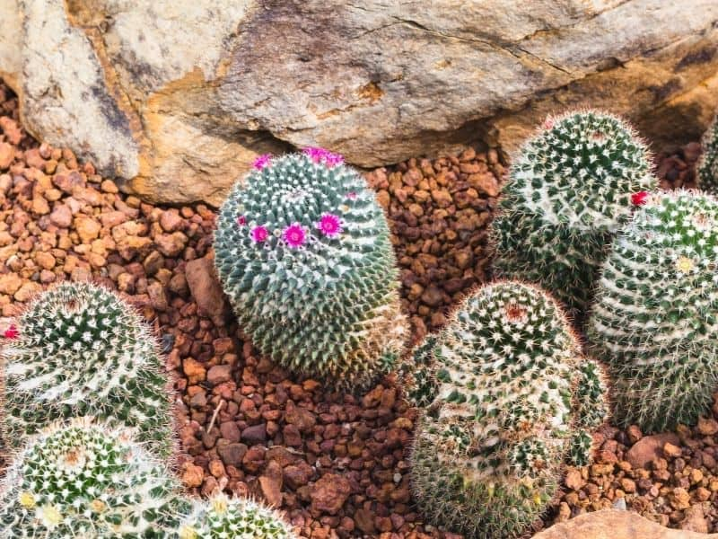 Cactus garden with rocks and sand
