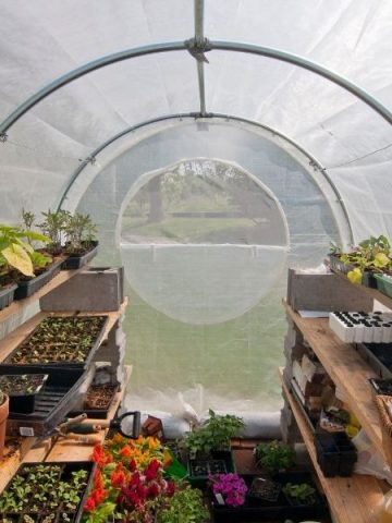 DIY greenhouse with lots of plants ready for planting