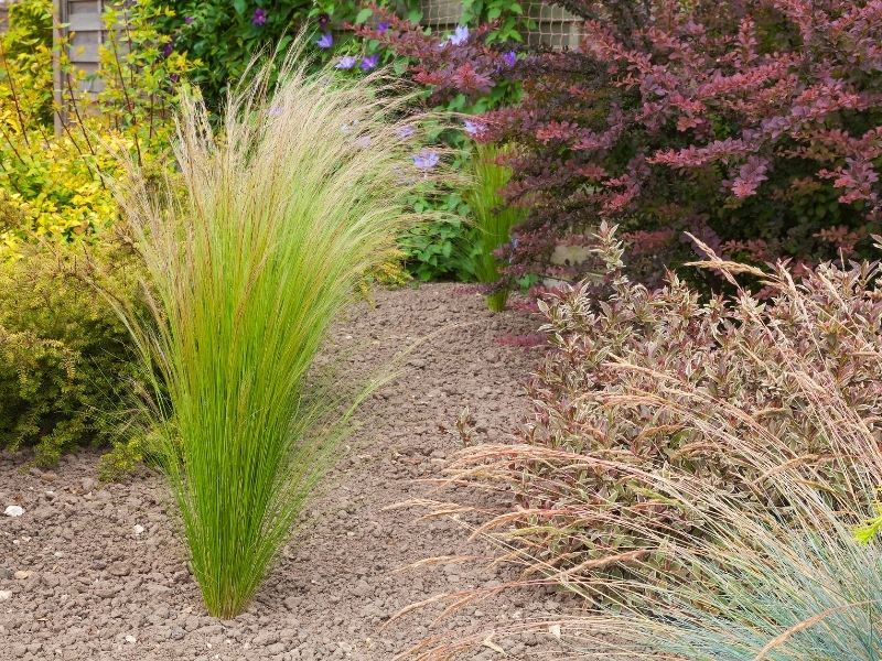 Drougt resistant grasses and shrubs