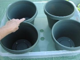 Pots placed at the bottom of the plastic bucket