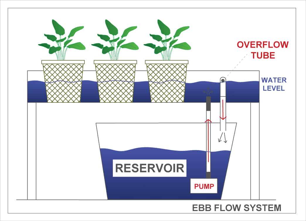 Ebb and flow diagram