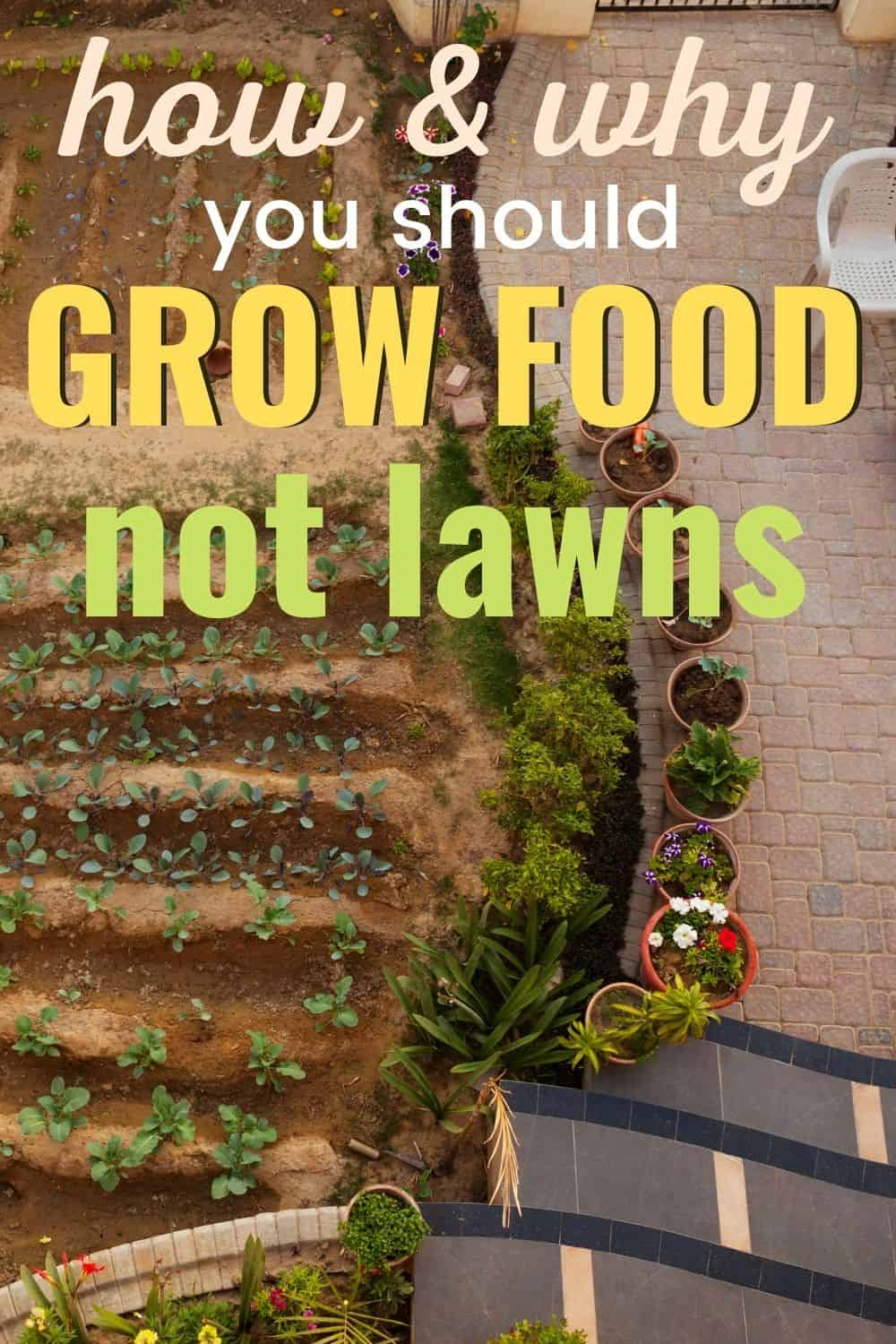 How and why you shuld grow food, not lawns