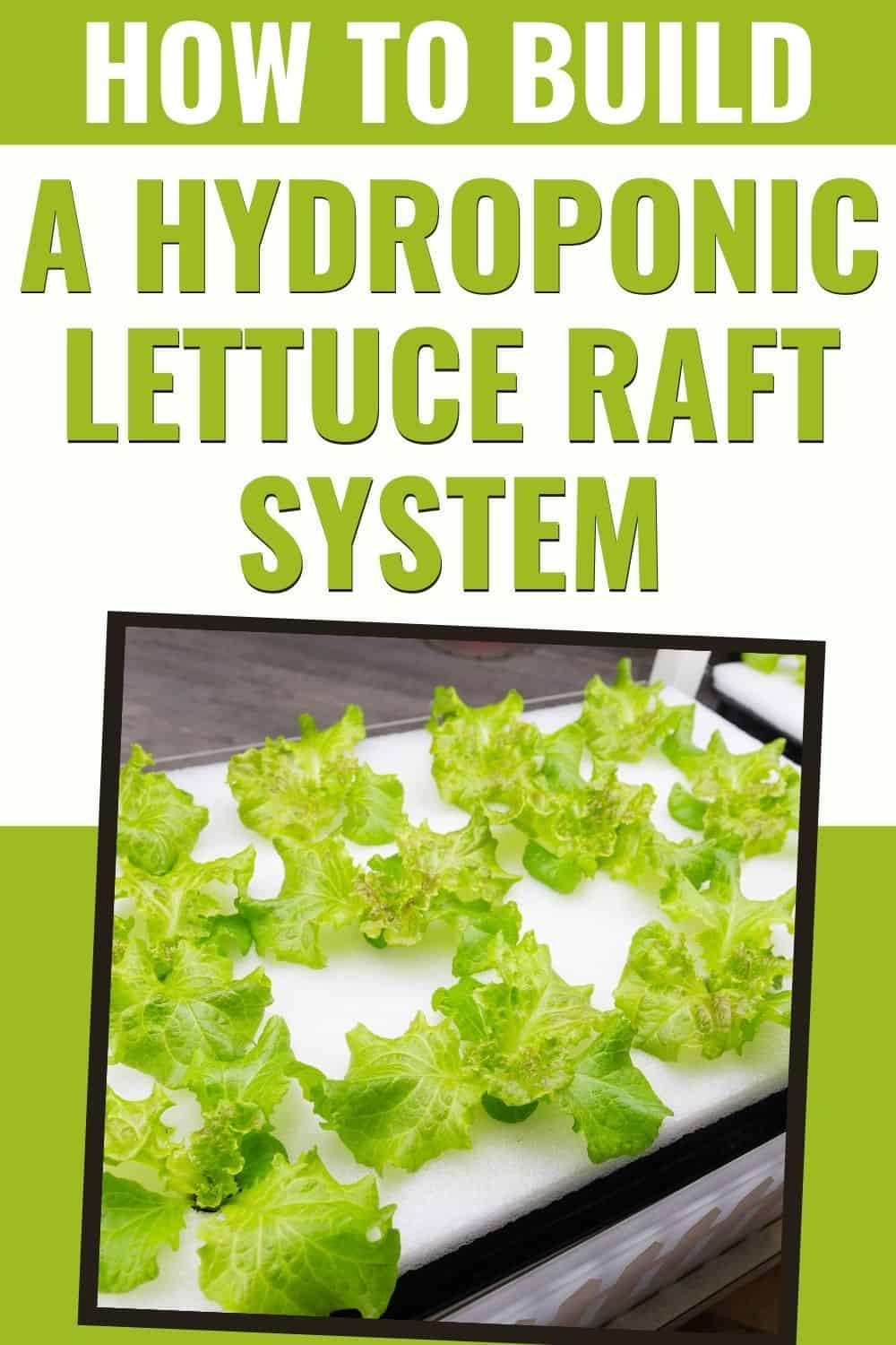 How to build a hydroponic lettuce raft system