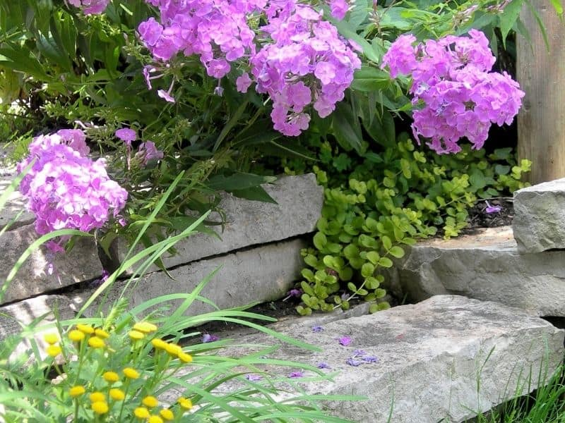 Bright flowers landscaping around rock steps