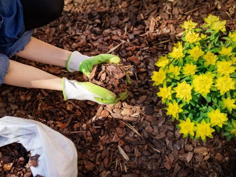 Woman mulching a flower bed