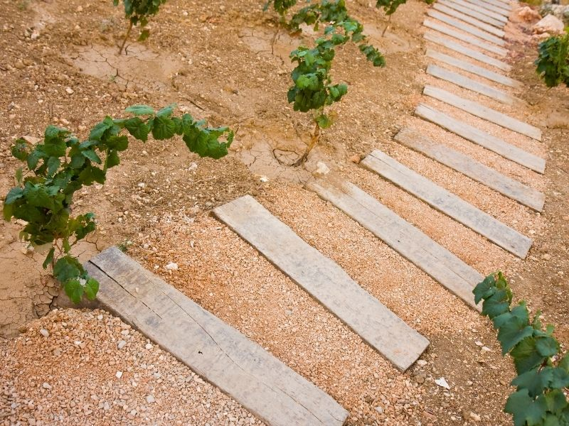 rustic grden path made from wood planks