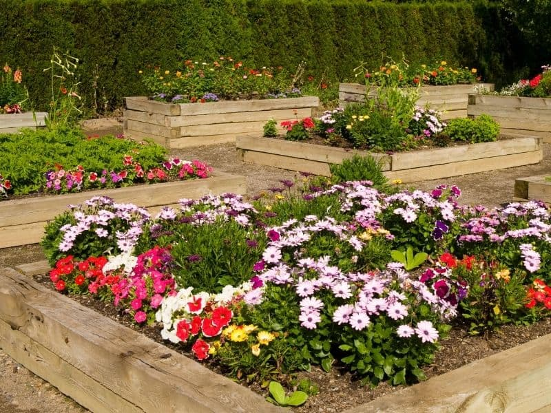 Flower garden in square raised beds