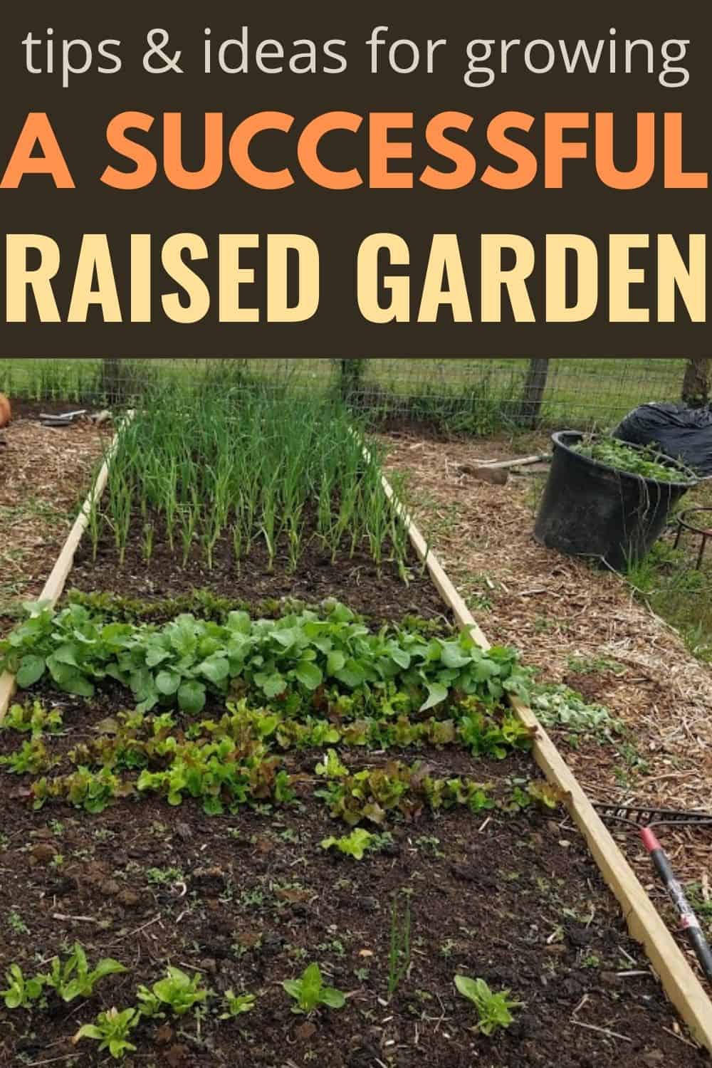 Vegetables growing in a raised bed garden