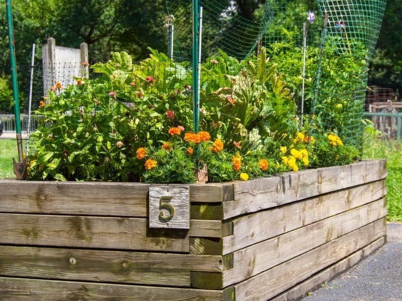 Tall wooden raised bed with flowers and vegetables