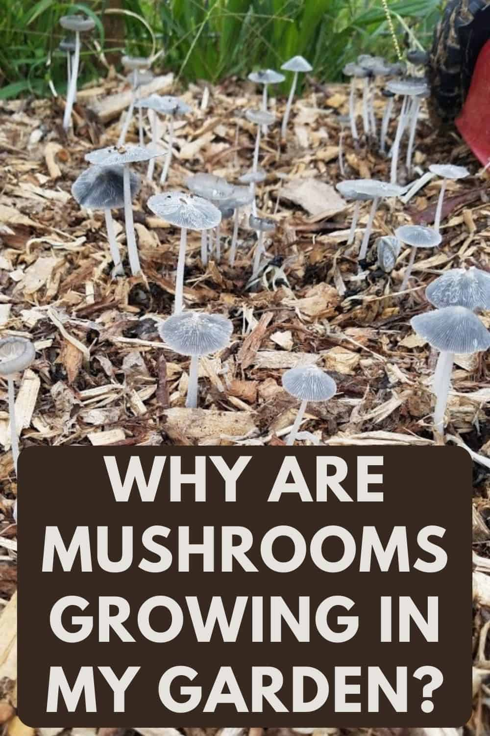 Why Are Mushrooms Growing in My Garden?