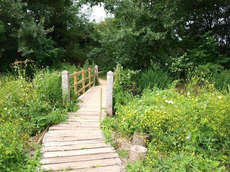 Wooden garden path that turns into a bridge