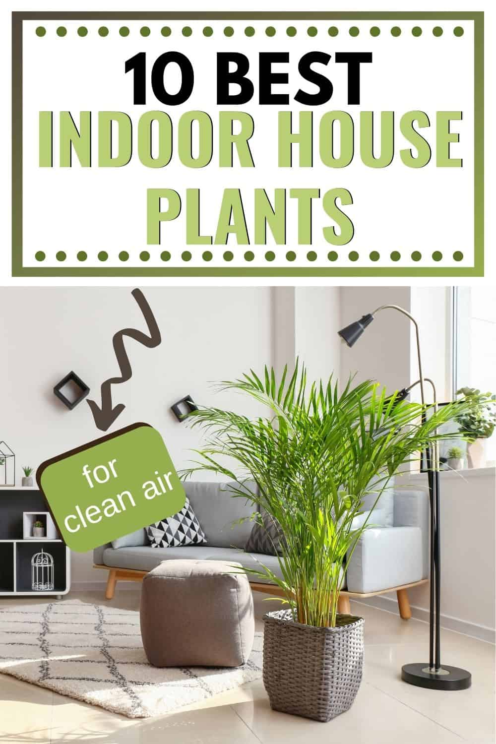 10 best indoor house plants for clean air