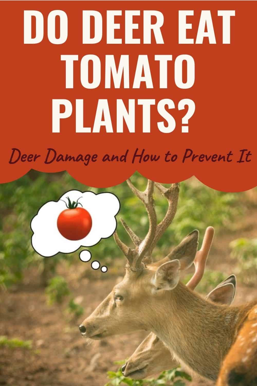 Do deer eat tomatoes and tomato plants?