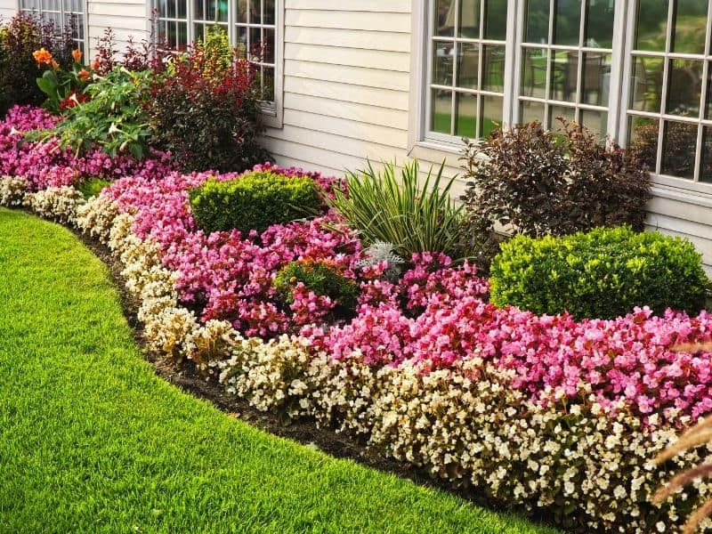 Beautiful flower bed with impecable edging