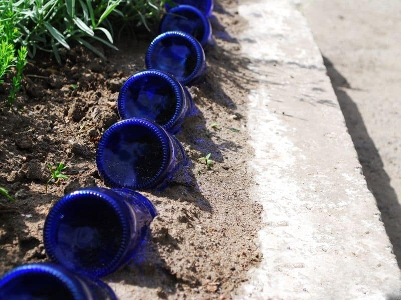Blue glass bottles lined up as edging for a flower bed