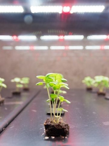 Hydroponic lights over some seedlings