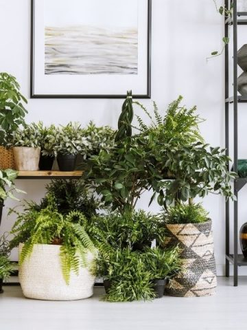 Indoor plant corner