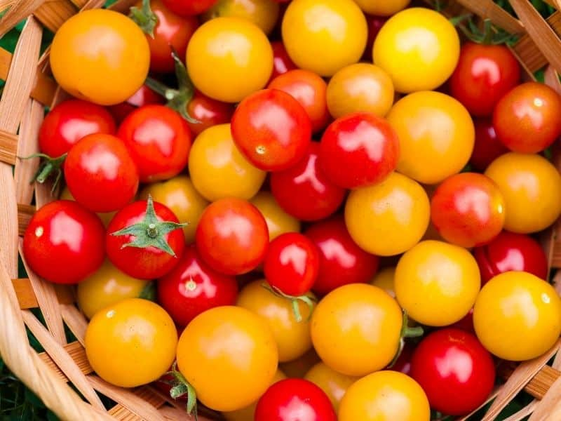 Basket full of red and yellow cherry tomatoes