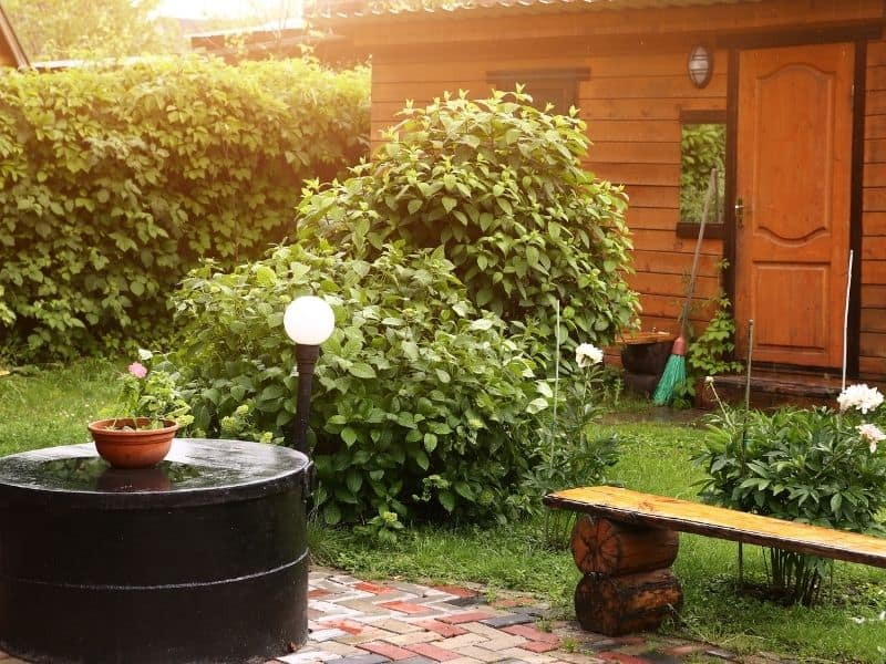 A rustic bench in front of the shed
