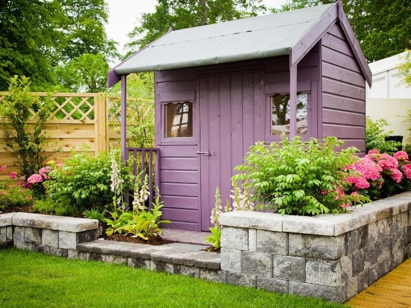 Small purple shed surrounded by lush vegetation