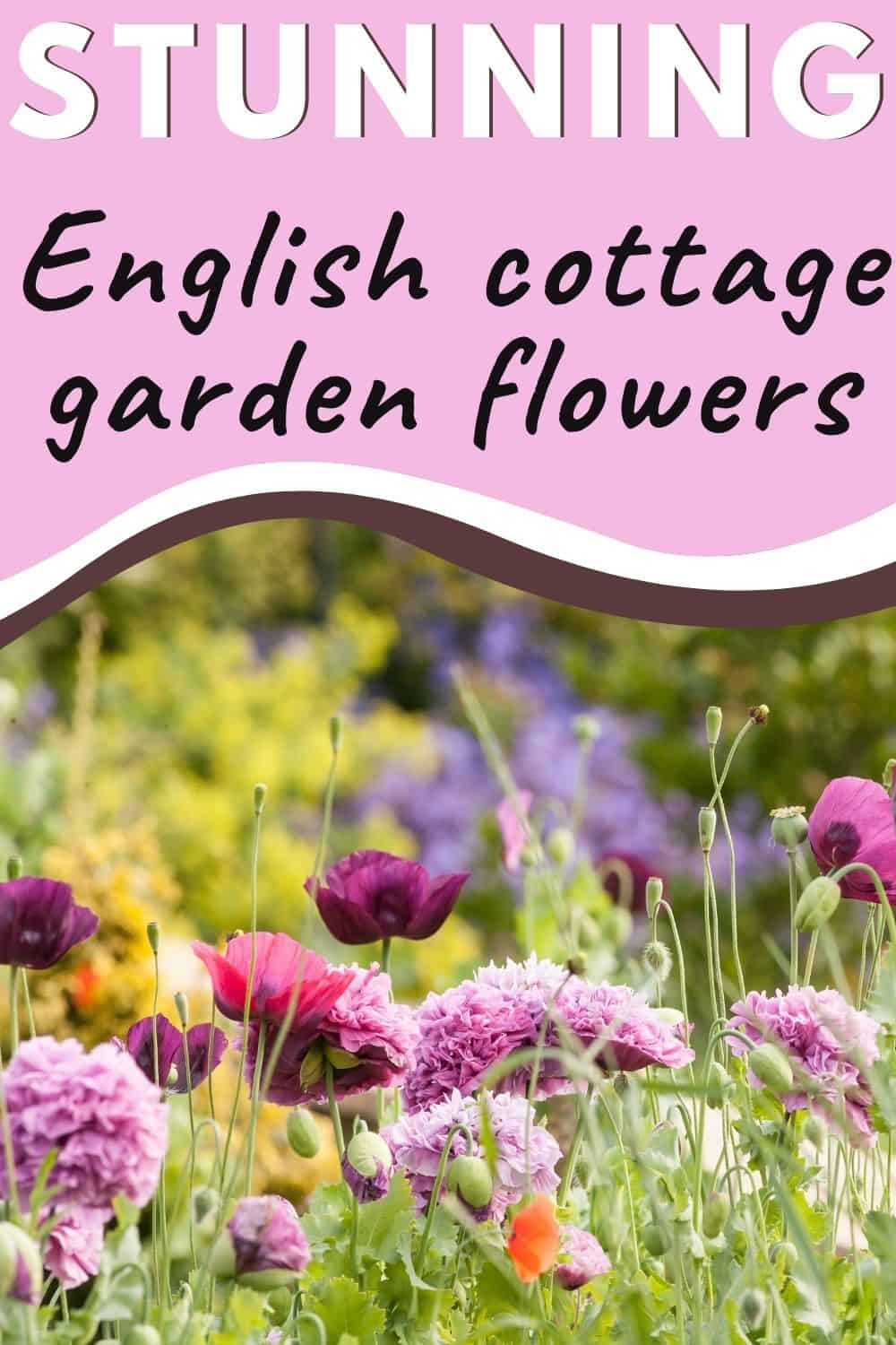 Stunning English cottage garden flowers