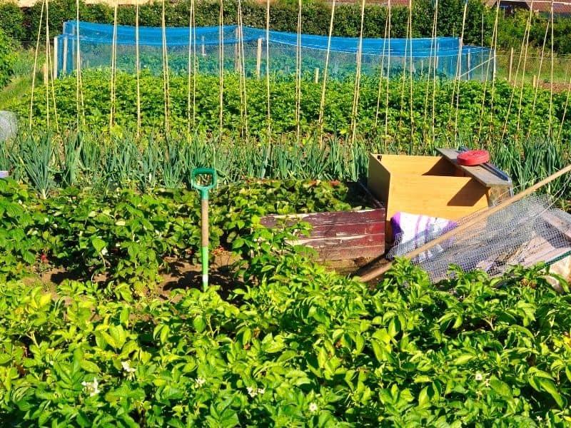 Vegetable garden in full sun